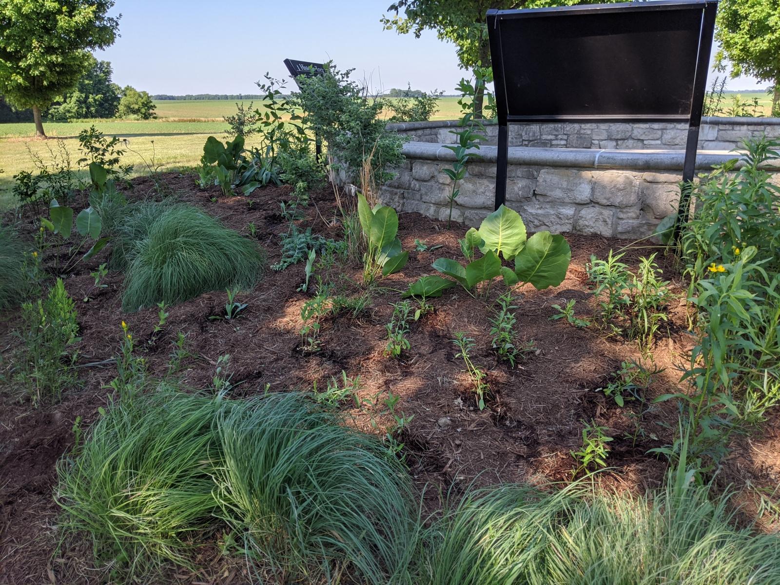 Wayside Pollinator Waystation Planting, June 12